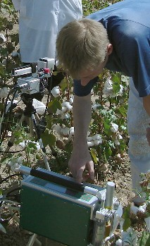 Determination of photosynthesis in cotton plants